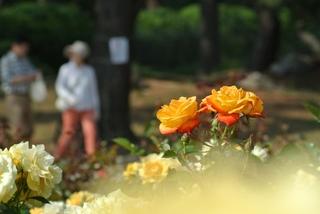 薔薇のダブルデート